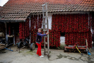 A woman holds a ladder as bunches of paprika hang on the wall of her house to dry in the village of Donja Lakosnica