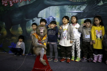 Kindergarten students pose for photographs with a trained monkey wearing a Korean traditional costume after a performance at Monkey School, in conjunction with Chinese Lunar New Year celebrations in Goyang