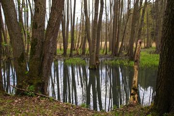 Moorwald, Wasserlandschaft