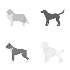 Collie, labrador, boxer, poodle. Dog breeds set collection icons in monochrome style vector symbol stock illustration web.