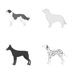 St. Bernard, retriever,doberman, labrador. Dog breeds set collection icons in monochrome style vector symbol stock illustration web.