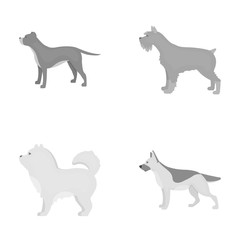Pit bull, german shepherd, chow chow, schnauzer. Dog breeds set collection icons in monochrome style vector symbol stock illustration web.