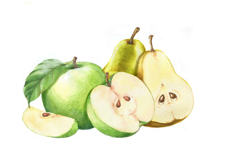 Hand-drawn watercolor isolated illustration of tasty yellow pears and green apples on the white background.