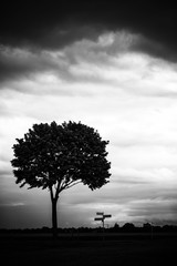 Single tree and signpost in front of cloudy sky