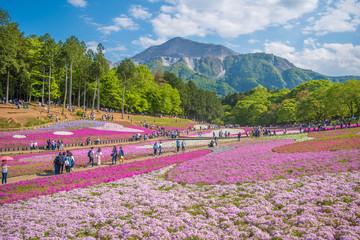 西武秩父・羊山公園の芝桜