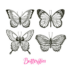set of sketch butterflies