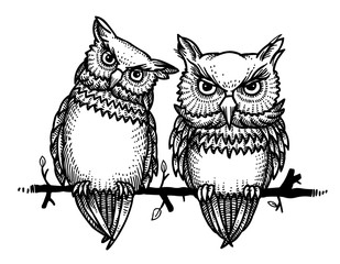 Cartoon image of cute owls. An artistic freehand picture.