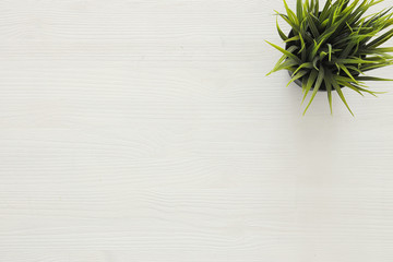 top view image of wooden white background and plant in pot