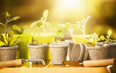 Wall Mural - Young plants in sunlight