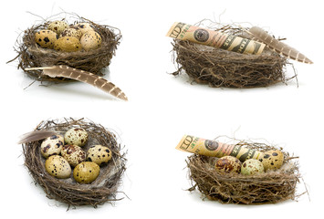 Eggs and money lie in a nest on a white background.