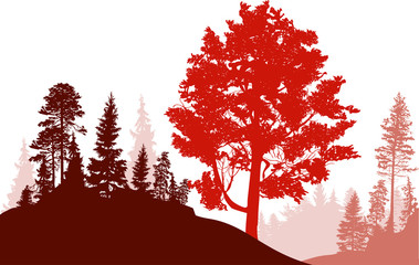 high red tree in forest isolated on white