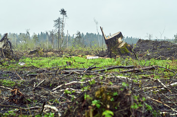 Field with felled trees