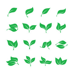 Set green leaves isolated from the background. Vector simple leaves tree.