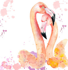 Watercolor loving couple of pink flamingos