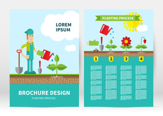 Brochure cover template. Infographic four stages of plant growth. Growing concept. Flat design, vector illustration.  Layout in A4 size