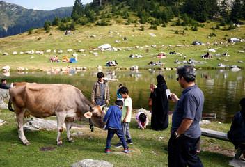 Tourists take pictures of a cow along the Prokosko Lake near Fojnica