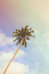 Single palm tree during sunny day with vintage filter. Instagram look