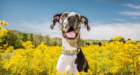 Obraz Dog In Flowers - fototapety do salonu