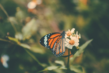 Butterfly in the jungle