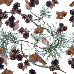 Seamless pattern with pine cones and branches isolated on a white background