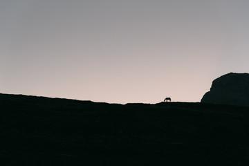 Pferd bei Sonnenaufgang an der Lavaredo Hütte in den Dolomiten, Italien Wall mural