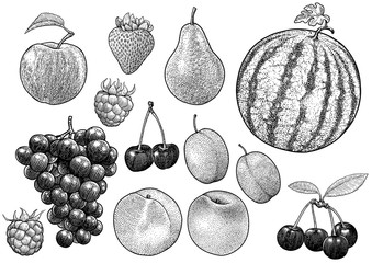Fruit collection illustration, drawing, engraving, ink, line art, vector