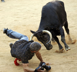 A photographer is knocked down by a wild cow during festivities in the bullring following the sixth running of the bulls of the San Fermin festival in Pamplona