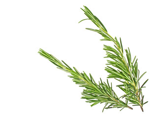 Sprigs of fresh rosemary isolated on white background