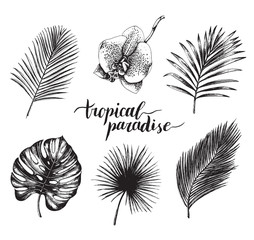 Vector vintage palm leaves illustration. Tropic paradise lettering with hand drawn collection of jungle foliage, flower.
