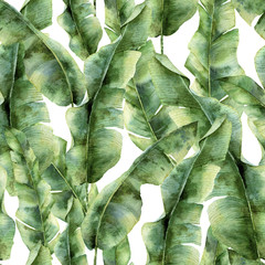 Watercolor pattern with banana palm leaves. Hand painted exotic greenery branch. Tropic plant isolated on white background. Botanical illustration. For design, print or background