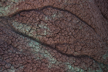 Snake-like Image on Cracked Red Dirt