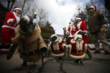 Penguins wear Santa Claus costumes during a promotional event for Christmas at an amusement park in Yongin