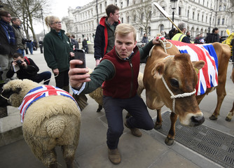 A farmer, takes a picture with his mobile phone as he is joined by a cow and a sheep during a protest by farmers in central London