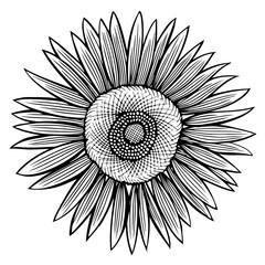 Doodle sunflower contour