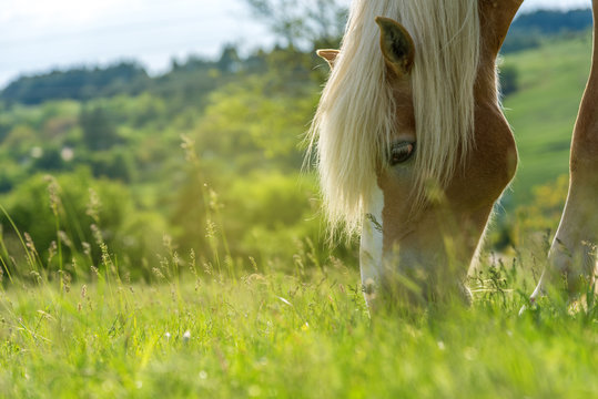 Horse grazing in a pasture with grass