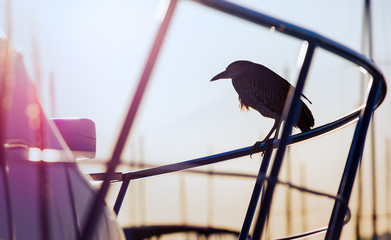 Silhouette of a Bird Sitting on the Rail of a Yacht
