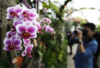 Photographer takes picture near a Cattleya orchid during The Orchid Show: On Broadway opening at the New York Botanical Garden