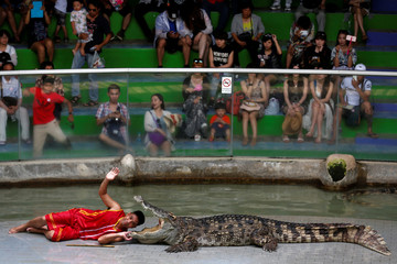 A zoo performer smiles as he puts his head between the jaws of a crocodile during a performance for tourists at the Sriracha Tiger Zoo