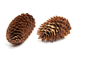 The fir cone isolated on white background
