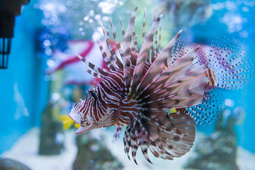 Marine fish and freshwater fish species in the Bueng Chawak Aquarium, Thailand.