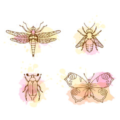Insects line art set on white background