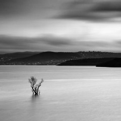 Conceptual landscape with long exposure. Black white minimalism, lonely tree in calm water. Place for advertising or text. Dramatic mood