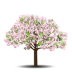 apple tree with pink flowers