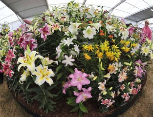 Visitors view floral displays at the annual Hampton COurt Flower Show in Hampton near London