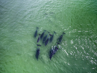 Top view of Bottlenose Dolphins in ocean, Cape Town South Africa