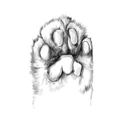 cat's paw with the pads pulled up sketch vector graphics black and white drawing