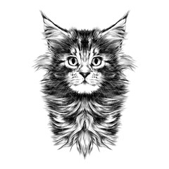 kitty baby breed Maine Coon head is symmetrical sketch vector graphics black and white drawing