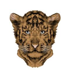 head tiger cub symmetric, sketch vector graphics color picture