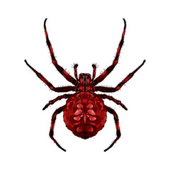 a spider with spots on the back red of the symmetric top view sketch vector graphics color picture