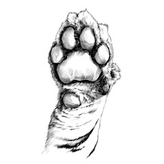 tiger paw pads sketch vector graphics black and white drawing